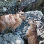 動物のカップル